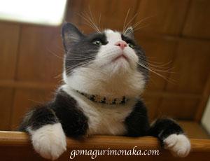 猫執事の白い手袋_a0064067_14535171.jpg