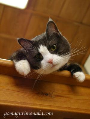 猫執事の白い手袋_a0064067_14541512.jpg