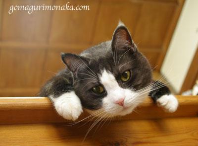 猫執事の白い手袋_a0064067_1454278.jpg