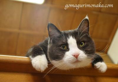 猫執事の白い手袋_a0064067_14542832.jpg