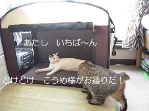 c0139488_1001984.jpg