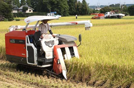 東金の夏 稲刈りが始まりました_b0114798_1741276.jpg