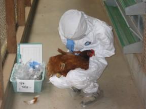 「鶏衛生検査」_a0120513_1340535.jpg