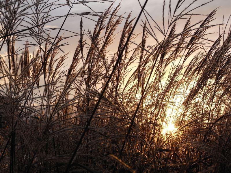 夕日のポプラ並木_c0025115_19452956.jpg