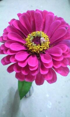 花を見ながら_d0031619_105939.jpg