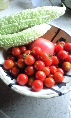 庭の野菜たち_d0031619_195053.jpg