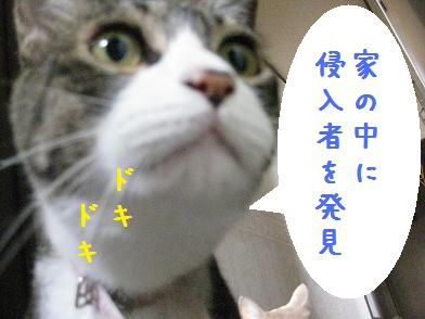 b0151748_12505981.jpg