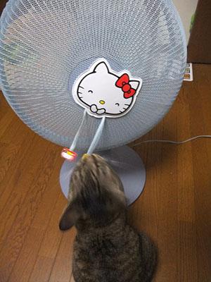 扇風機!_d0034352_22341855.jpg