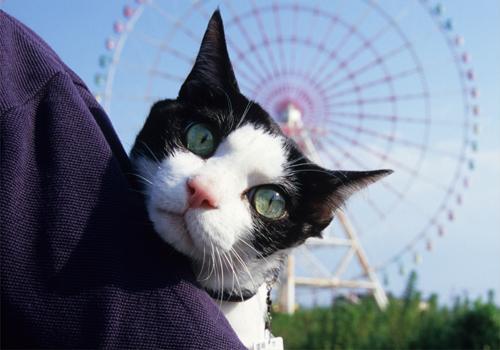 ちわりくんの夏休み旅行アルバム・2009.08(3)~BIWAKO~_c0181457_4144463.jpg