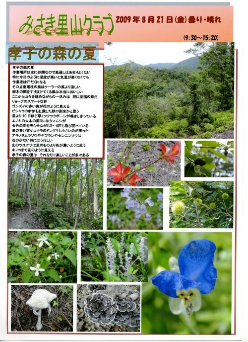 孝子の森の夏_c0108460_21245330.jpg