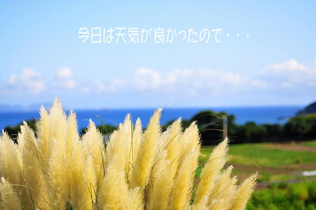 b0187161_94612.jpg