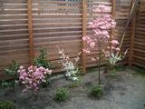ハナミズキの庭