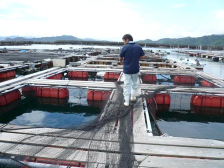 大分県農林水産研究センター・水産試験場を訪ねて・・・_c0177195_7453249.jpg
