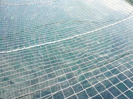 大分県農林水産研究センター・水産試験場を訪ねて・・・_c0177195_748473.jpg