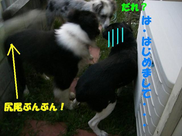 b0137913_22354663.jpg