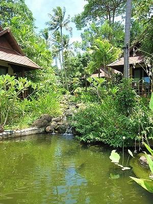 タイ~サムイ島~の花 2_a0060141_1184939.jpg