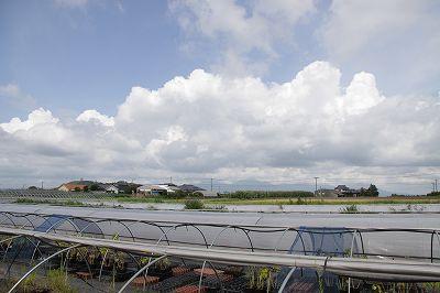 8月20日、夢咲きヴィオラ発芽の記録を撮りに霧島へ_b0137969_1052326.jpg
