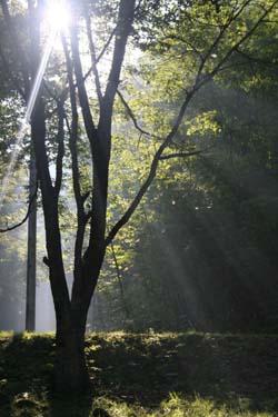 森の中のコテージ_a0133078_2053169.jpg