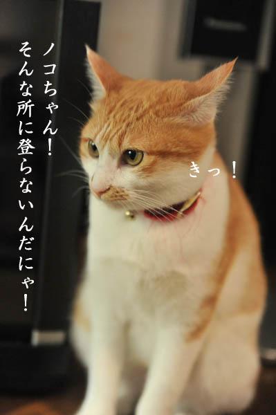 b0141397_947154.jpg