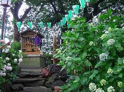 白山神社 (十社巡り 3)_c0187004_15125027.jpg