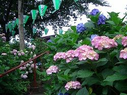 白山神社 (十社巡り 3)_c0187004_1516153.jpg