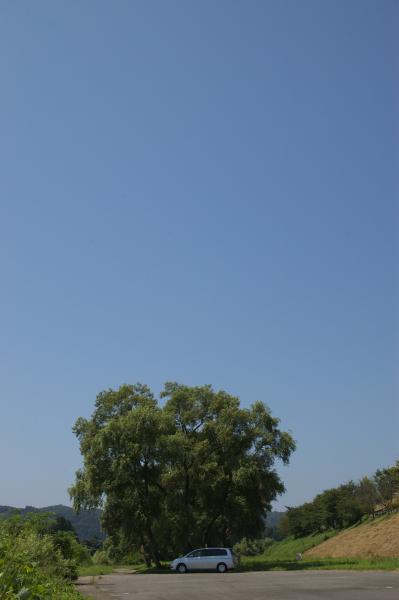 夏の名残_e0132310_16182128.jpg