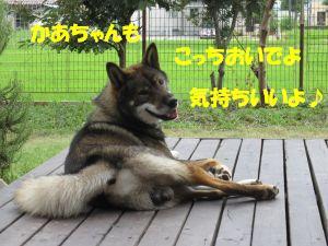 f0143123_19541861.jpg