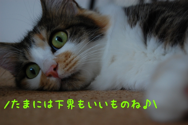 c0181639_12934100.jpg