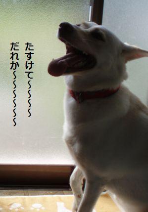 f0195543_21462014.jpg