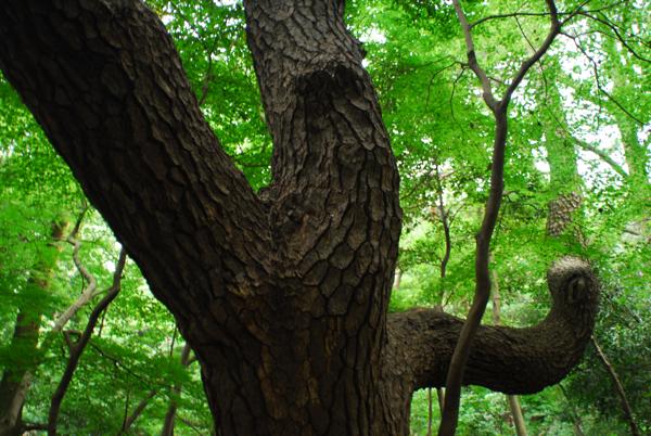白金自然教育園_a0006744_18371663.jpg