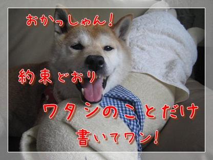 夏の終わりに_c0049950_23325056.jpg