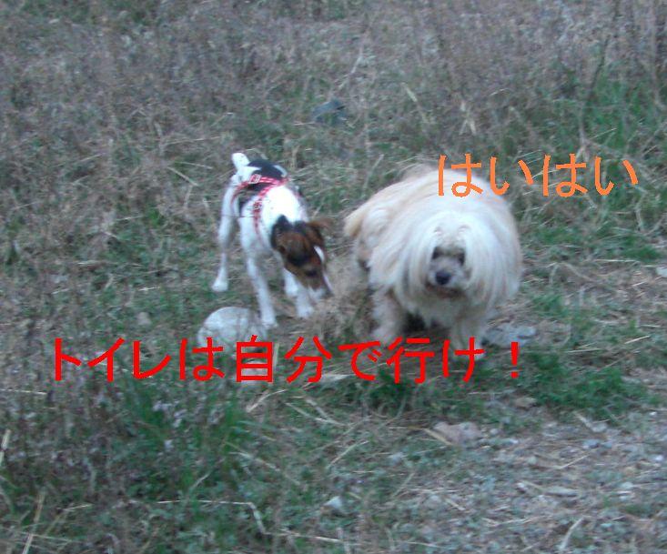 f0053952_12592410.jpg
