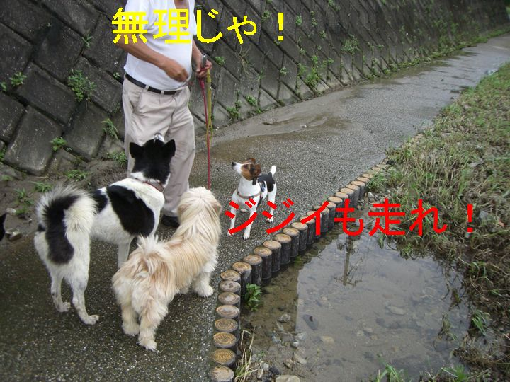f0053952_1344462.jpg