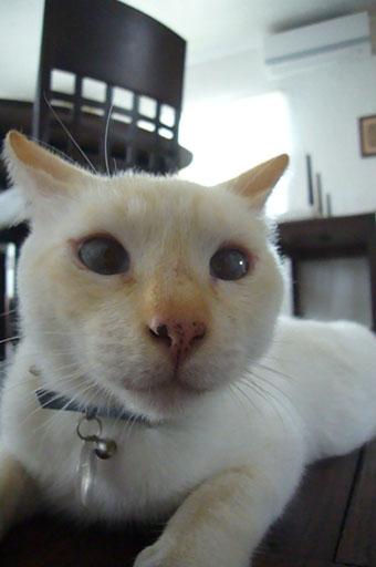 frying cats._c0153966_21493699.jpg