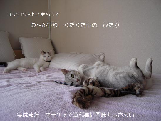 c0139488_18381633.jpg