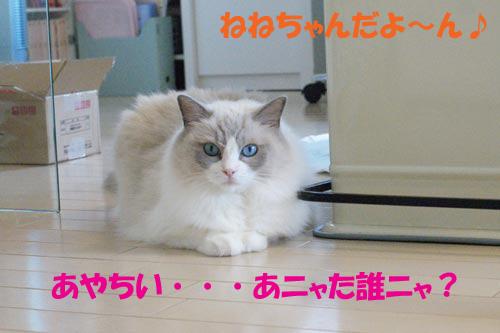 f0014893_13427.jpg