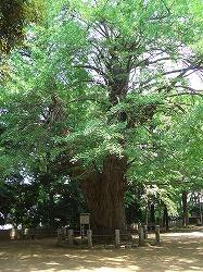氷川神社  (十社巡り 4)_c0187004_21473355.jpg