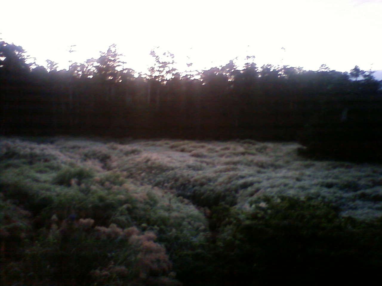 初霜 The first frost of the year_e0155231_763768.jpg