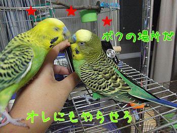 f0196665_037463.jpg