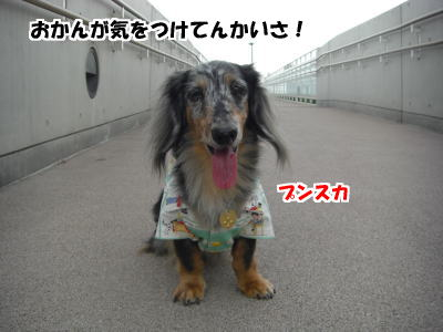 d0020869_142039.jpg