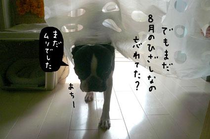 f0170072_1151279.jpg