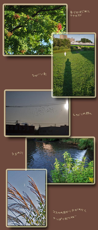 秋を見つけに・・・_b0019313_18234166.jpg