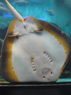 のとじま水族館はサービス精神がすごい_c0053520_2245471.jpg