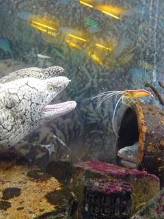 のとじま水族館はサービス精神がすごい_c0053520_22545053.jpg