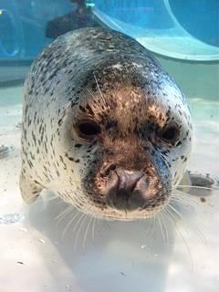のとじま水族館はサービス精神がすごい_c0053520_23141991.jpg