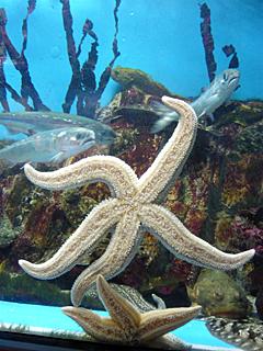 のとじま水族館はサービス精神がすごい_c0053520_23174226.jpg