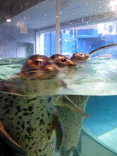 のとじま水族館はサービス精神がすごい_c0053520_238571.jpg