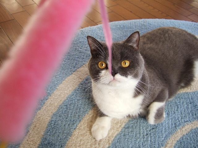 tantan、猫を思い出す…其の壱_f0032020_0171631.jpg