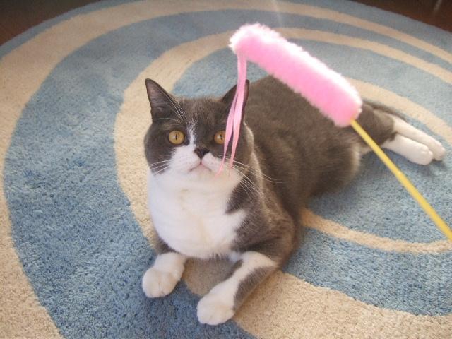 tantan、猫を思い出す…其の壱_f0032020_017338.jpg