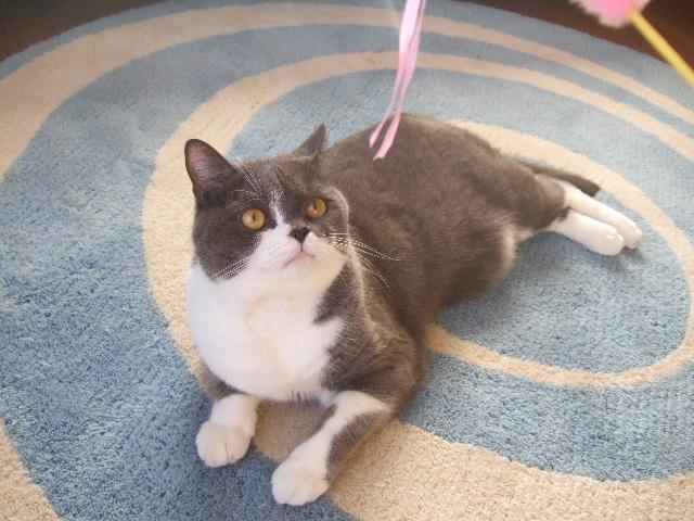 tantan、猫を思い出す…其の壱_f0032020_0175461.jpg